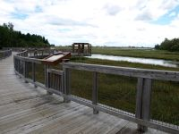 Salt-Marsh-Walkway-beresford-NB