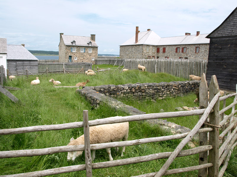 sheep-grazing-among-the-houses-fortress-Louisbourg