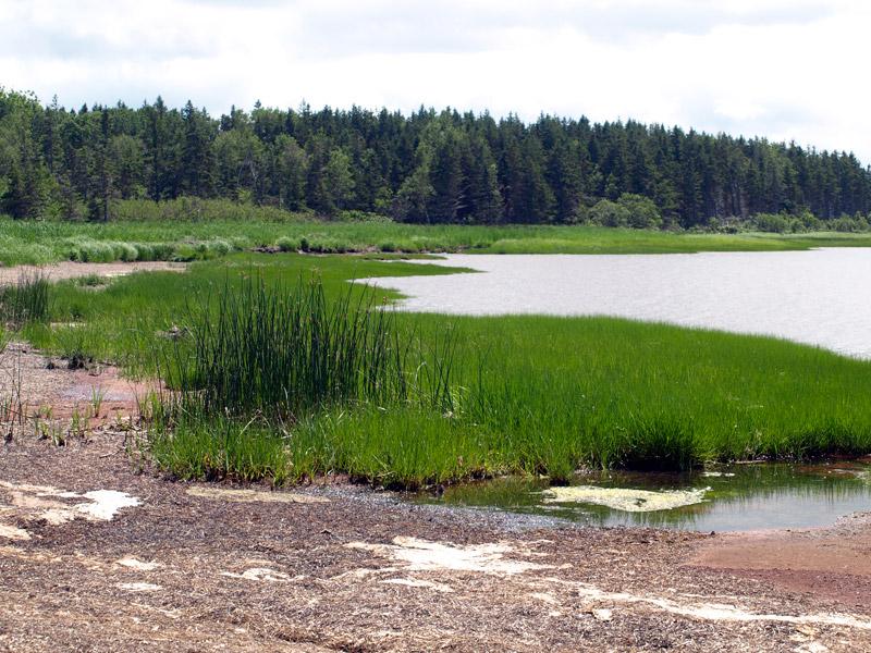 marsh-end-of-Savage-Harbour-PE