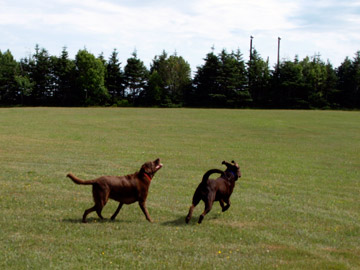 Chessey and Sadie Running in the field at Bayside RV Campground