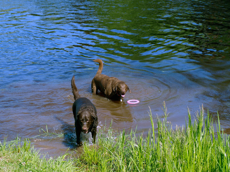 Chessey-&-Sadie-swimming-in-the-river-Bridgetown-Family-Campground